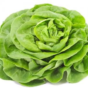 salade-verte-laitue-scarole-pesticide-comment-laver-la-salade-salade-en-sachet-danger-600x500