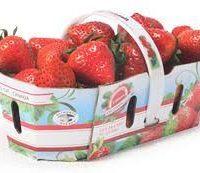 fraise contenant Qc