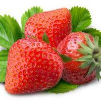 fraise fournisseur