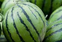 mini melon local