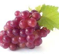 raisin rouge fournisseur