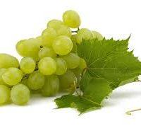 raisin vert fournisseur