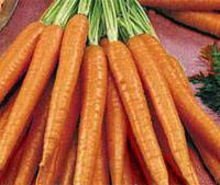 carotte bio local