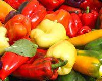 poivron couleur varié de la ferme
